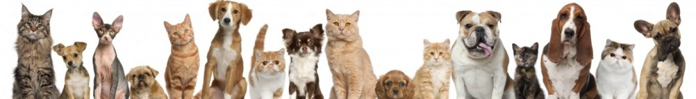 Cropped Cropped Dogs Cats Banner Large Jpg Baeyens Hauk Veterinary Hospital