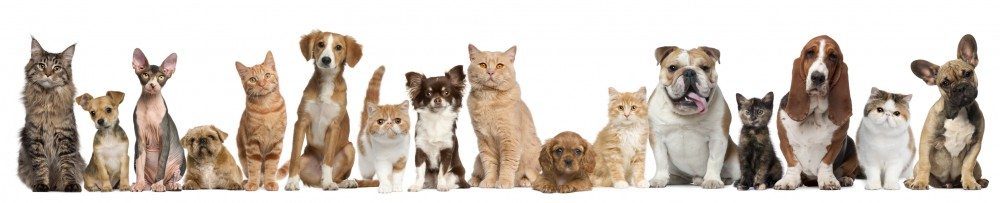 Cropped Dogs Cats Banner Large Baeyens Hauk Veterinary Hospital